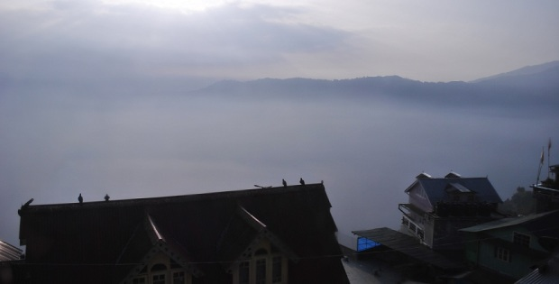 good morning darjeeling!